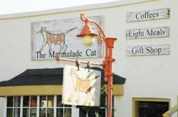 marmalade-cat-Darling