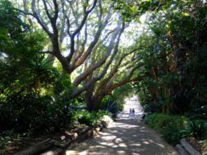 Kirstenbosch-National-Botanical-Garden-06
