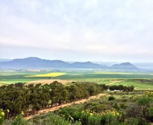 Sip-South-Africa-Carmien-Tea