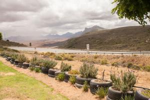 West-Coast-Way-Cape-Town-Kardoesie-8