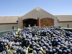 West-Coast-Way-Ormonde-grapes